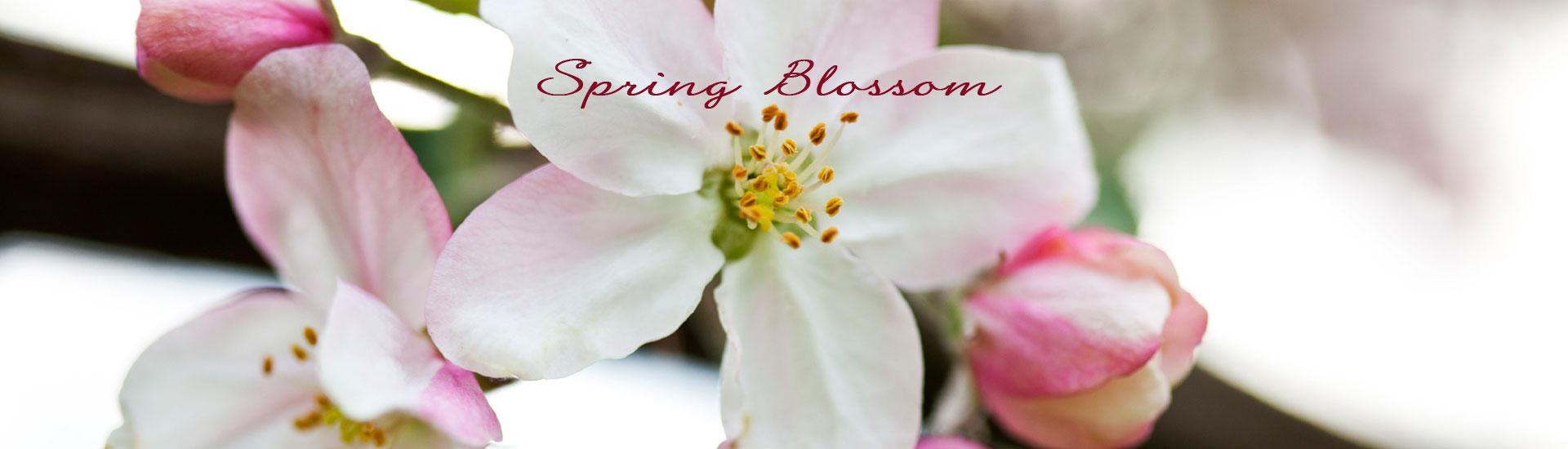 Spring Blossom Refreshment
